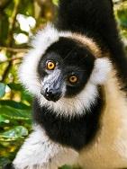 Madagaskar - Wunderwelten
