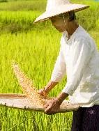 Vietnam - Von den Bergstämmen bis zum Mekongdelta