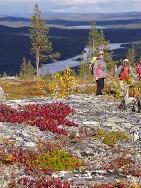 Finnland - Lappland - Ruska im Herbst