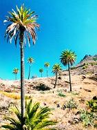 Kanaren/Spanien - La Gomera - Trekking & Relaxen