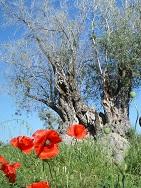 Zypern - Der unbekannte Norden